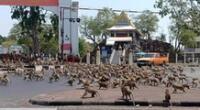 Los monos ha llegado a agredir a los comerciantes de la zona.