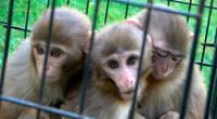 Los hermanos abrazan al mono con síndrome de Down, en Gaziantep, Turquía, 5 de julio de 2020.