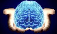 Entérate sobre los últimos estudios más impactantes del cerebro.