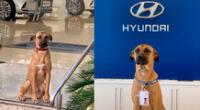 El perrito callejero ahora es parte de la reconocida empresa Hyundai.