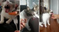 El gato gato solo come galletas dietéticas y algunas verduras.