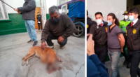 'Príncipe'  es fiel acompañante del señor Camposano desde hace diez años y tras el ataque del agresor quedó herido en la cabeza y parte de su hocico, siendo atendido por el personal de la policía canina.