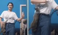 Los usuarios en las redes sociales no pararon de reír con el cómico comportamiento de los gatos en el video compartido en las redes sociales.