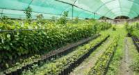 Presentación será hoy en el Instituto Nacional de Innovación Agraria.