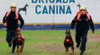 Denuncian que habrían dejado sin agua sin comida a brigada canina