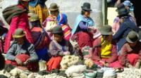 Debido a las bondades del clima y del relieve, en la región Quechua se han podido desarrollar las actividades económicas en ganadería y agricultura.