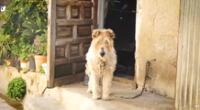 La cachorra fue abandonada encadena a una pared.