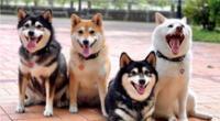 Las fotografías de los perritos se hicieron virales en redes sociales.