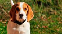 El tierno comportamiento de un perrito hacia un hombre que lo salvó de ser sacrificado