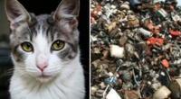 Reto viral: encuentra al gato escondido en la chatarra.