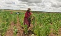 La producción agrícola es una de las principales actividades económicas.