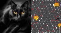 Reto viral: encuentra al gato negro camuflado entre los murciélagos.