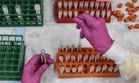 En el estudio se examinaron más de 5.000 secuencias genéticas del coronavirus.