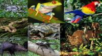 La Selva alta o Rupa rupa tiene gran diversidad de fauna silvestre.