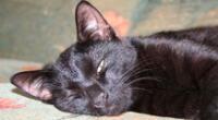 Gatito fue descubierto durmiendo dentro de un cajón