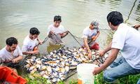 La piscicultura en granjas es muy popular en esta región.