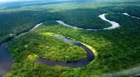 La Selva baja u Omagua está llena de bíodiversidad.