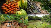 Gran biodiversidad en la Selva baja u Omagua.