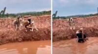 El perro más travieso causó furor en TikTok