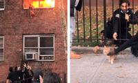 Gatito salta de un edificio en llamas para salvar su vida