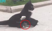Ratón se acurruca al lado de un gato luego de que este lo persiguiera