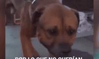 Perro llora desconsoladamente al darse cuenta que fue abandonado