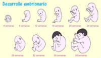 La primera señal de que se ha producido el embarazo es que desaparece la menstruación.