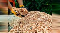 Residuos de madera, ramas, restos de podas, entre otros, sirven para implementar el acolchado ecológico.
