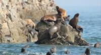 La Reservas nacionales preservan la biodiversidad.