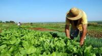 La agricultura es una de las más importantes actividades económicas.