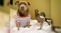 Peggy necesitaba a un cachorro que nutrir, y Molly necesitaba a una progenitora que la cuidara.
