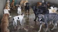 Un gran rifa de apoyo a los animalitos abandonados