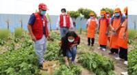 Jóvenes con discapacidad intelectual del Inabif cultivan hortalizas