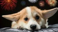 ¿Cómo proteger a tus mascotas de la pirotecnia?