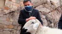 Los usuarios de Twitter se conmovieron por el gesto del alcalde turco, quien se muestra comprensivo con las ovejas.
