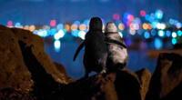Los pingüinos perdieron a sus parejas y parecen consolarse el uno al otro.