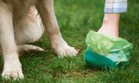 Algunos perros se sienten atraídos por el olor de la comida no digerida en las heces.