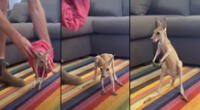 Conmovedora historia del canguro se hizo viral en redes sociales.