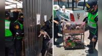 Los perros fueron llevados hasta el albergue El Pasto, ubicado en el distrito de Socabaya, para que sean revisados y puestos en adopción responsable.