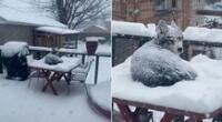 El perrito disfrutó de una tarde en la nieve.