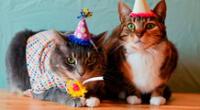 Las personas asistieron a una fiesta de cumpleaños clandestina.