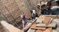 Dos canes fueron rescatados por la PNP y la Municipalidad de San Martín de Porres.
