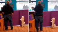 El perrito ha cautivado a todos en TikTok