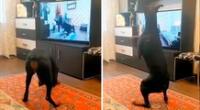 En el tutorial se ve a una joven instructora de ejercicios y a su perro, un doberman, cooperando en la rutina.