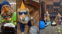 Peculiar video del perro se viralizó en las redes sociales.