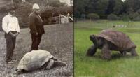La tortuga 'Jonathan' se ha robado las miradas de todos en Internet.