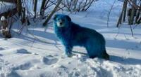 Los perros han sido revisados por el veterinario y su salud está fuera de peligro.