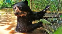 pide ayuda para reubicar a animales tras inundaciones