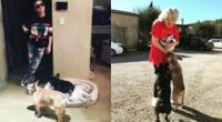 El paseador llevaba a los tres Bulldogs de Lady Gaga cuando recibió un disparo, y sufrió el hurto de dos de las mascotas.