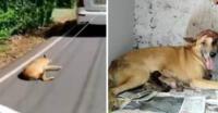 La vida ha cambiado en 360º para Abbakka, una perrita que sufrió la peor de las crueldades por parte de quien más quería.